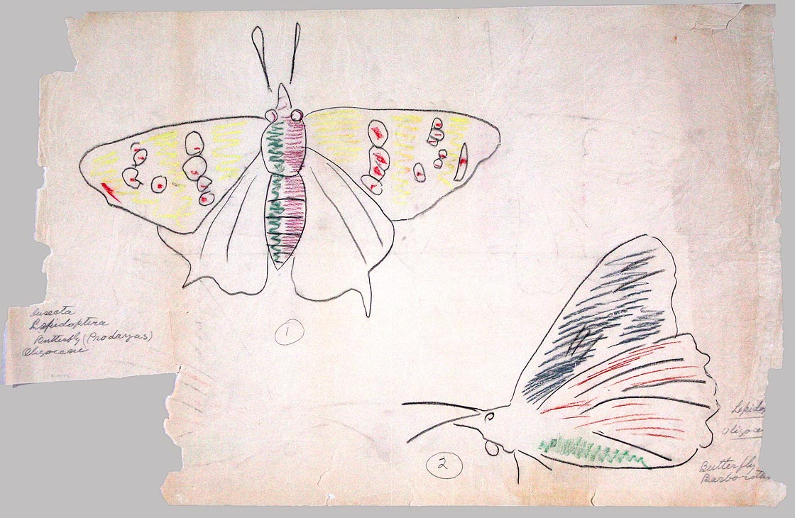 """""""Insecta Lepidoptera/ Butterfly (Prodryas)/ Oligocene"""" by Erwin Barbour, c. 1928. Nebraska Capitol Collections"""